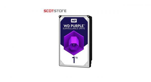 هارد western 1t purple